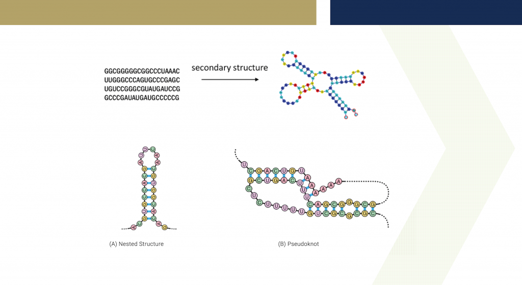 Graphic showing diagrams of RNA secondary structures